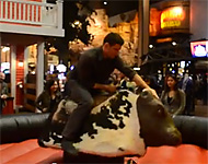 AC-Stories: Ride the Bull