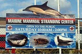 Marine Mammal Stranding Center - Sea Life Museum